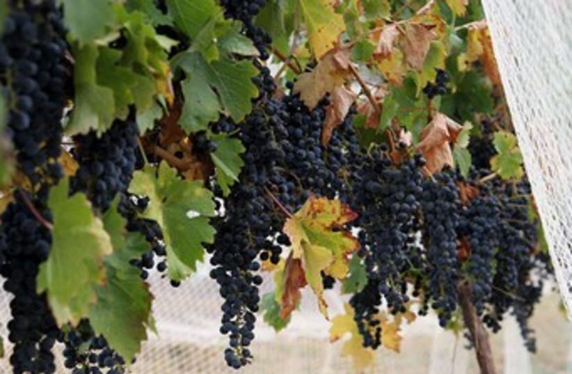 Winery (photo credit: Wikicommons)