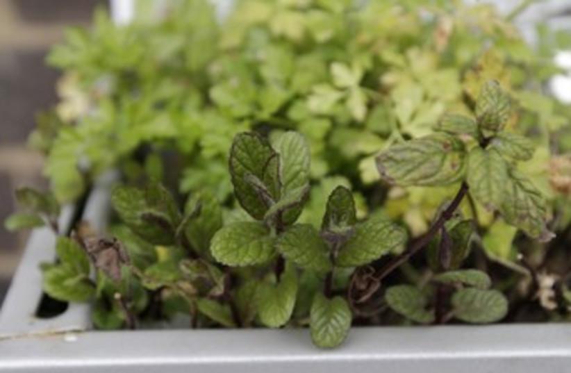 Herbal remedies 370 (photo credit:  REUTERS/Simon Newman)