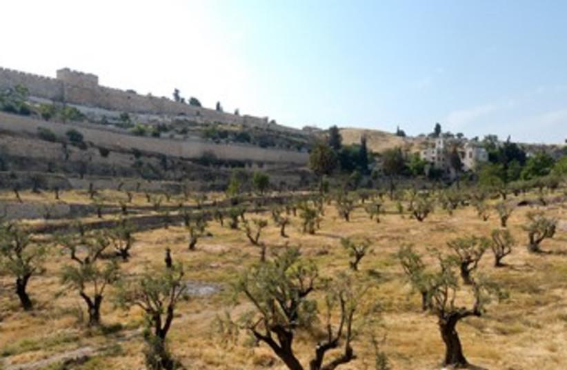 Kidron Valley (photo credit: BiblePlaces.com)