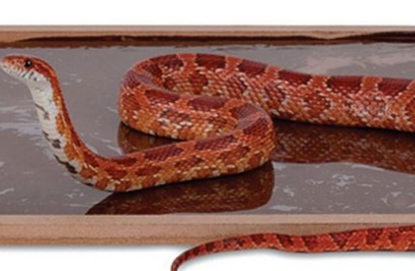 Snake trap 370 (photo credit: BRC Pest Control Compnay Ltd.)