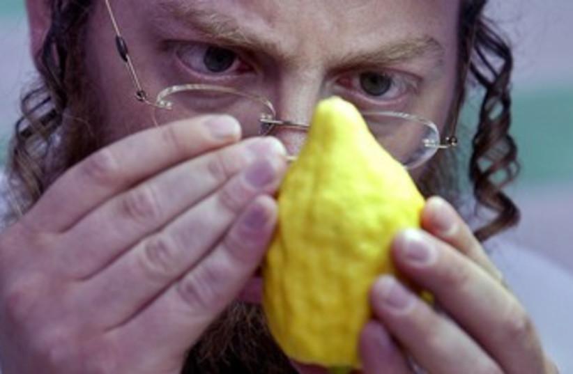 Man inspects etrog 370 (photo credit: Reuters Photographer / Reuters)