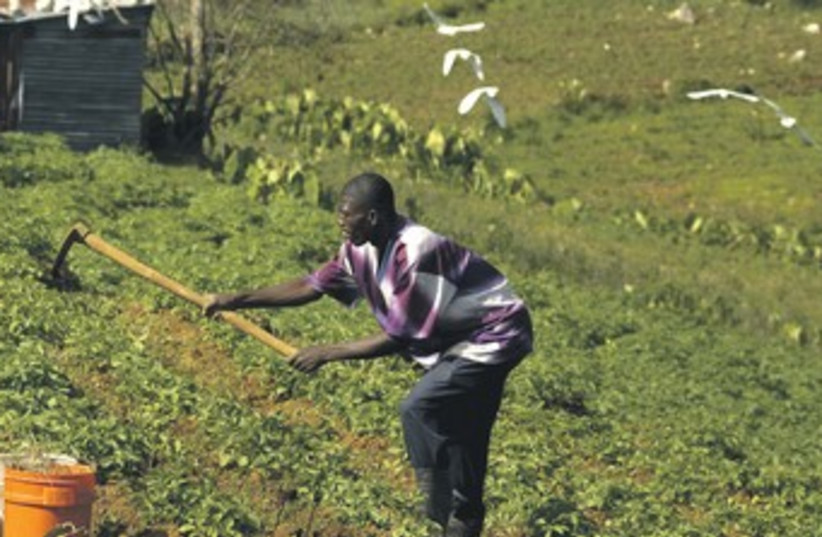 Tending to crops 370 (photo credit: Swoan Parker/Reuters)