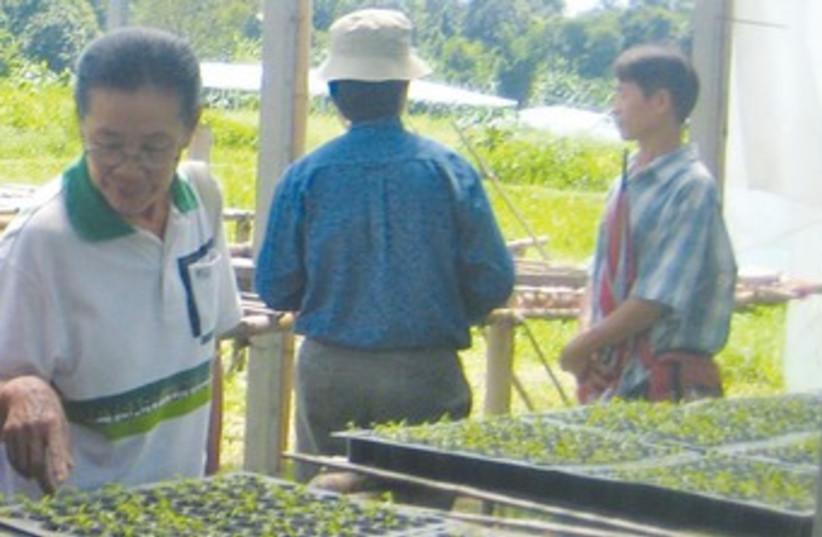 Thai agriculture 370 (photo credit: Sharon Udasin)