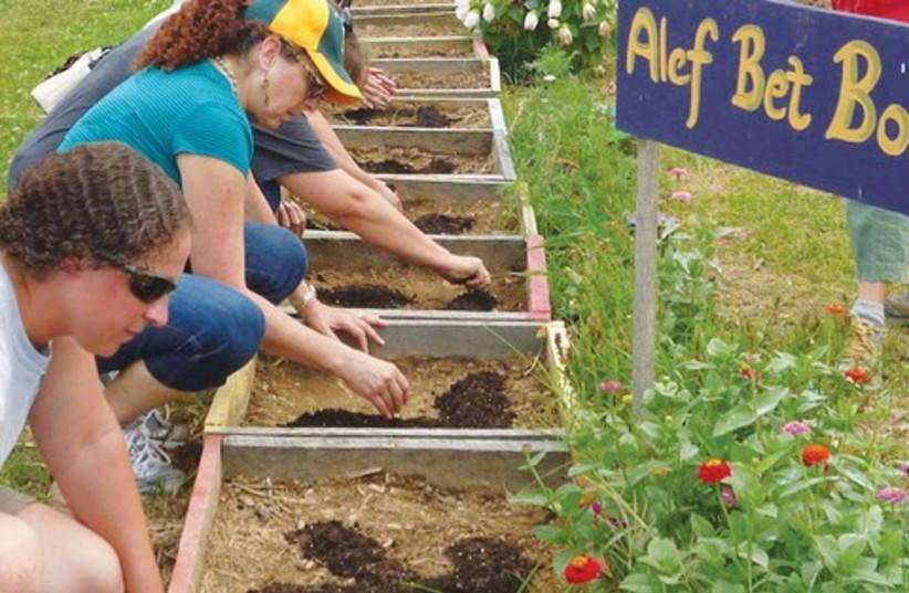 Jewish farming 521 (photo credit: Paul Foer)