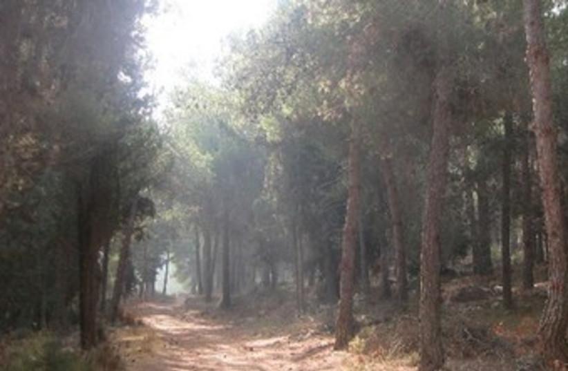 TREES IN Jerusalem's Har Adar forest 370 (photo credit: Courtesy Itzhak Rabihiya)