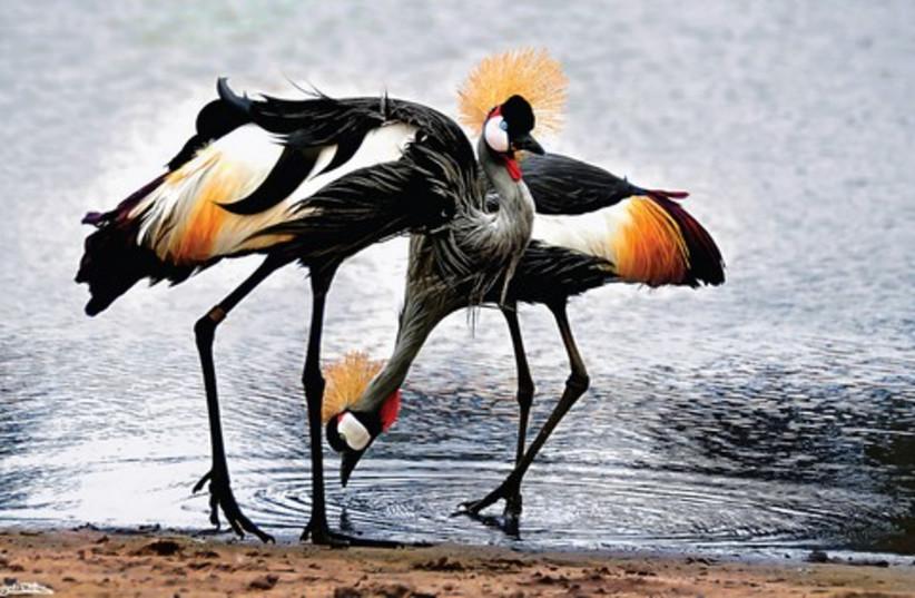 Birds (photo credit: Israel Weiss)