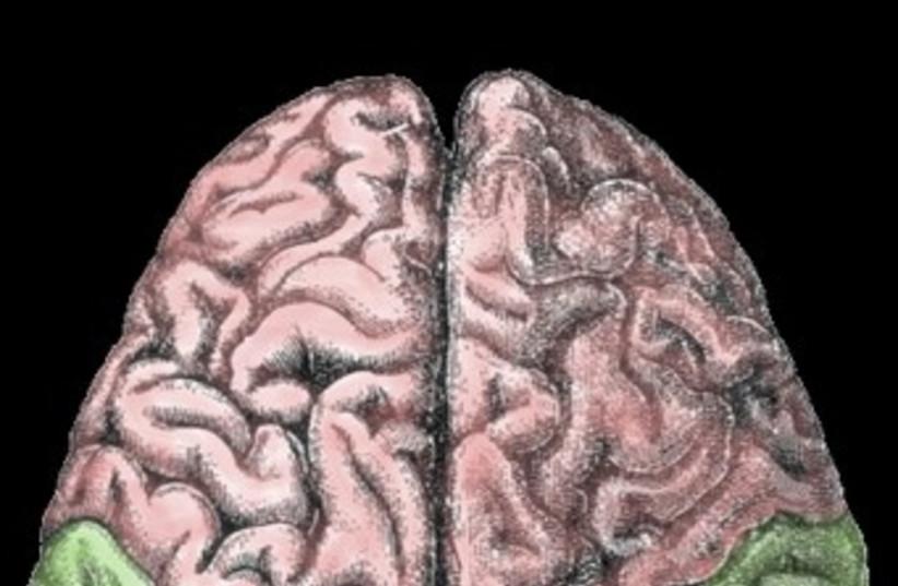 Brain (photo credit: Wikicommons)