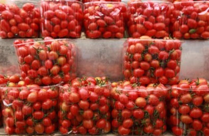 Cherry tomatoes Mahane Yehuda (photo credit: Marc Israel Sellem)