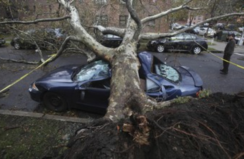 Tree felled by Sandy 370 (photo credit: REUTERS/Gil Cohen Magen)