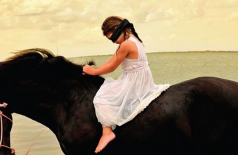 'Marwari Stallion #3' (photo credit: TOM CAMBERS)