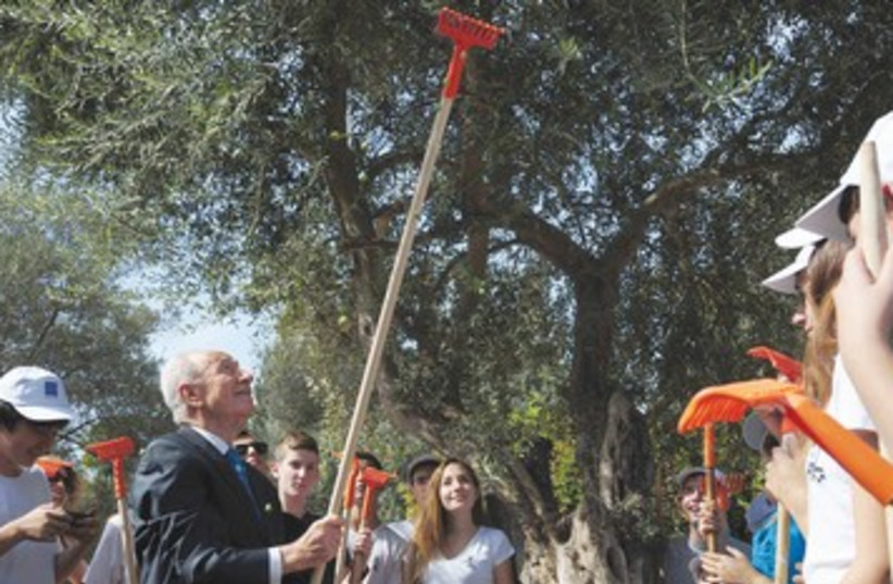 President Shion Peres inaugurates olive season 390 (photo credit: Koby Gidon/GPO)