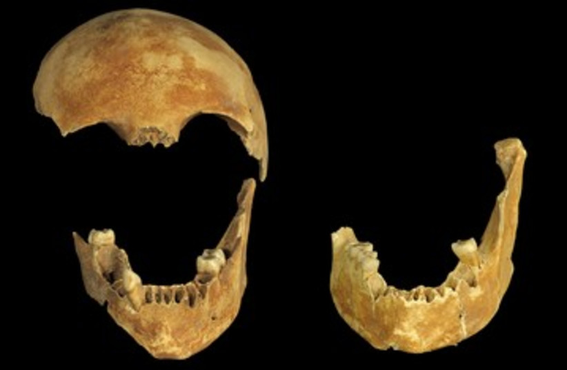 8,500-year-old skulls found in well 390 (photo credit: Clara Amit / Israel Antiquities Authority)