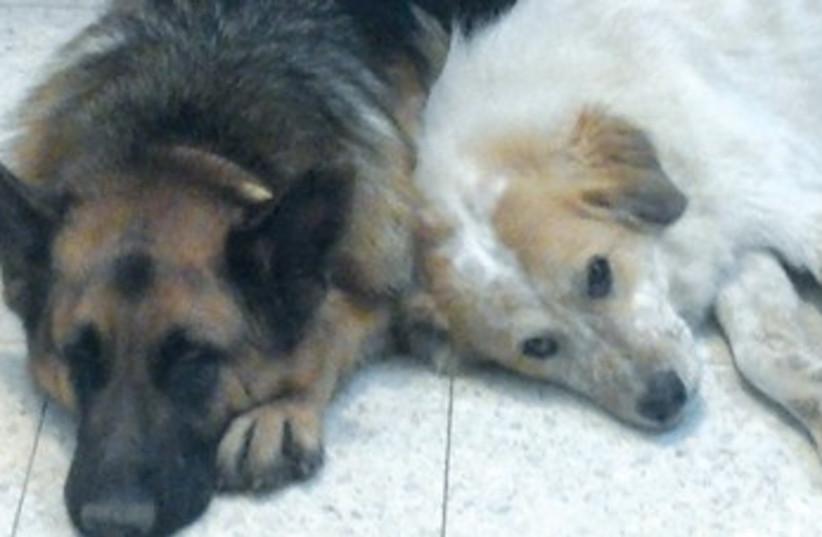 Dogs 370 (photo credit: Courtesy of Kineret Rozen-Edelman)