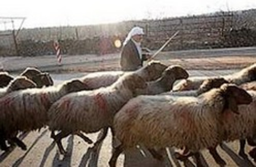 Druse shepherd 248.88 (photo credit: Ariel Jerozolimski)