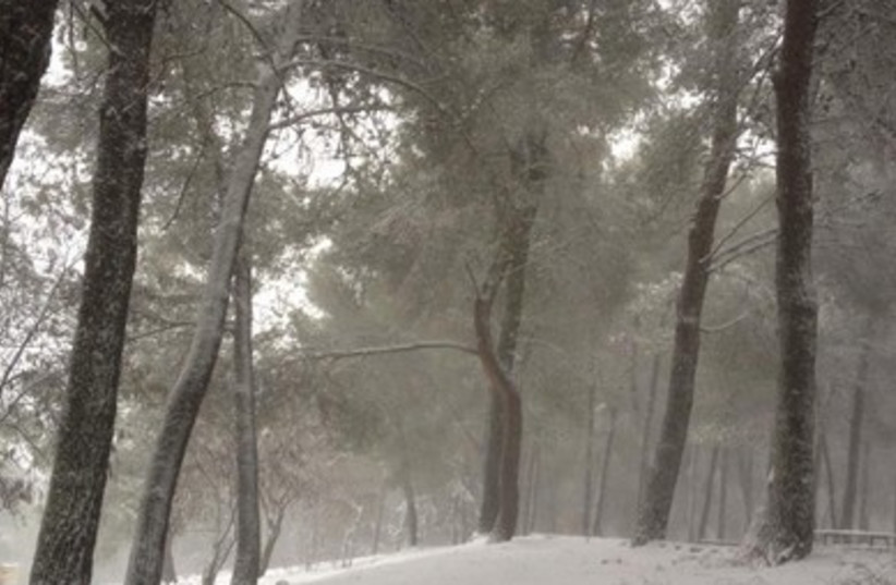 Snow-covered trees in the Safed area