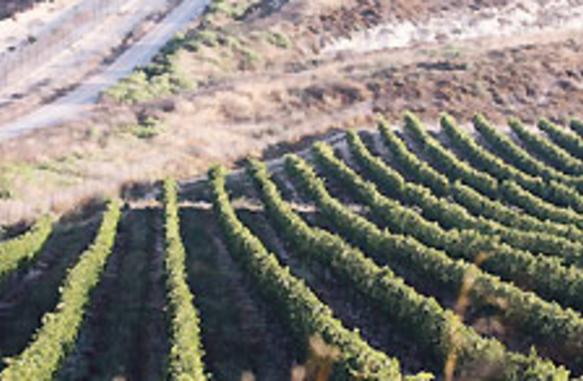 vineyard 88 224 (photo credit: Ariel Jerozolimski)
