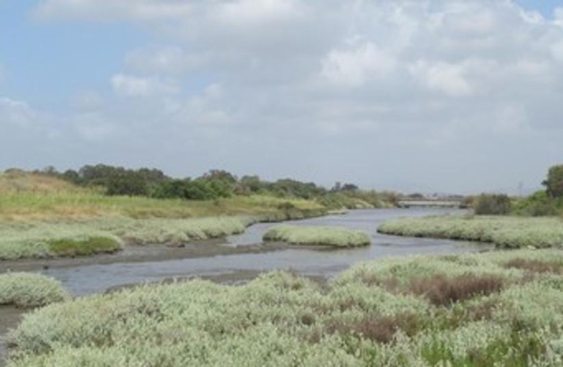 Salt marshes at the Kishon River banks 370 (photo credit: Amit Mendelssohn)