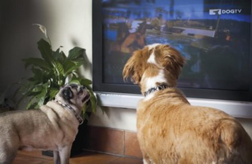 Dog TV (photo credit: Courtesy)