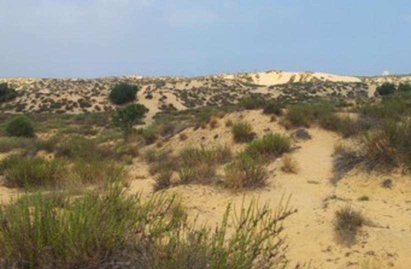 Ashdod sand dunes (photo credit: Dov Greenblatt/SPNI)