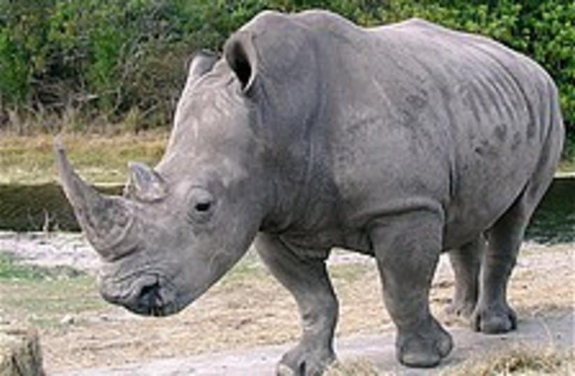 rhino 224.88 (photo credit: Courtesy)