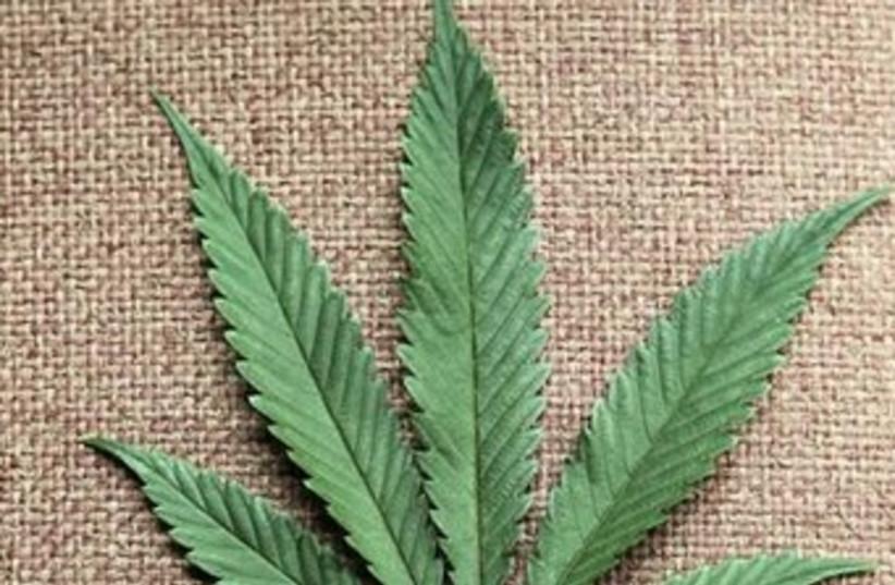 Marijuana leaf370 (photo credit: Reuters)