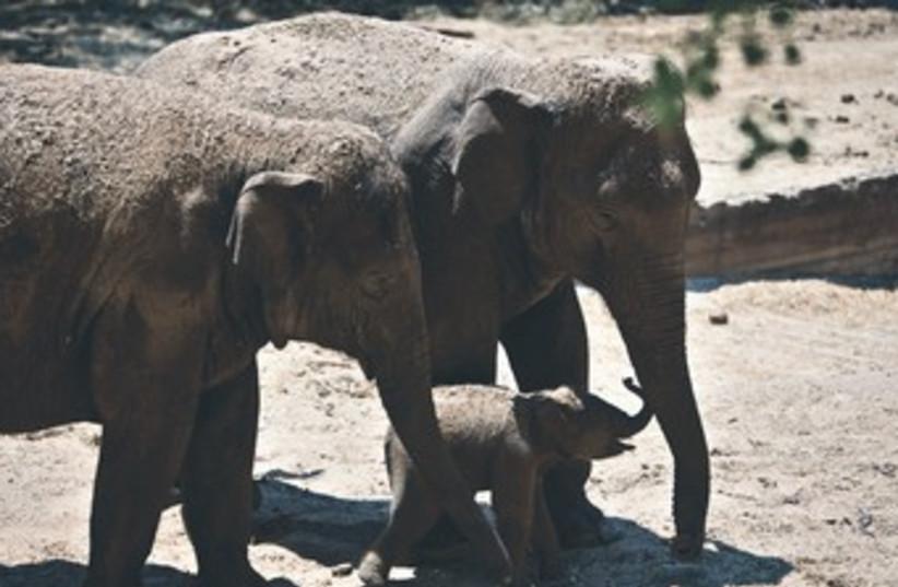 Elephant (photo credit: REUTERS)