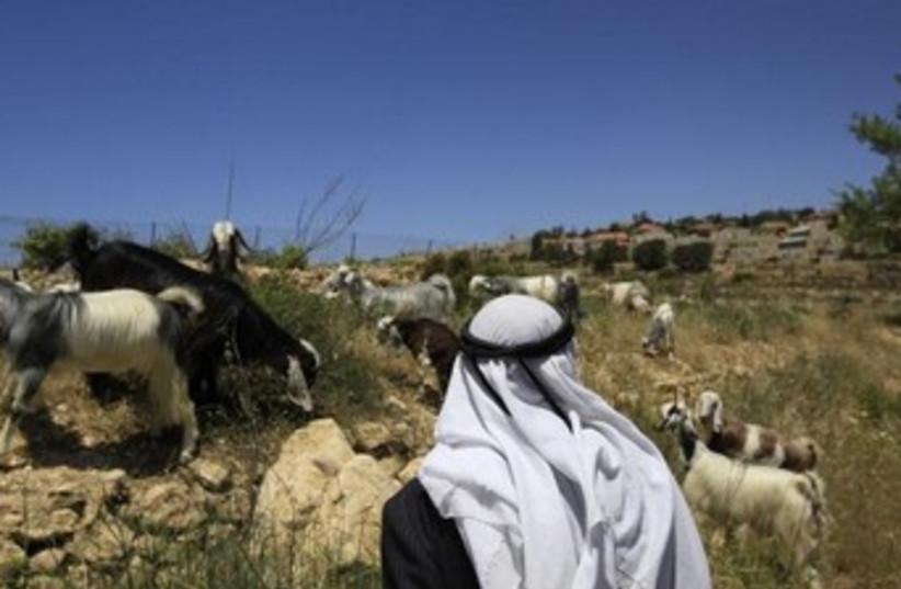 A Palestinian shepherd 370 (photo credit: REUTERS/Ronen Zvulun)