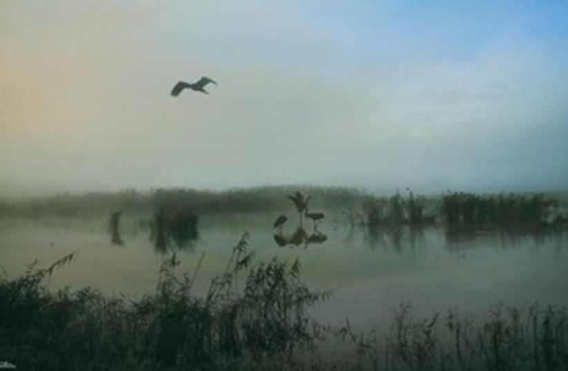 Birds flying over gray marsh 370 (photo credit: Israel Weiss (weisssi@bezeqint.net) http://artfram)