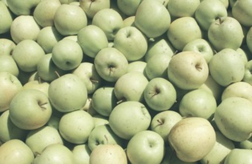 Israeli apples 370 (photo credit: Yisrael Doron/Agriculture Ministry)
