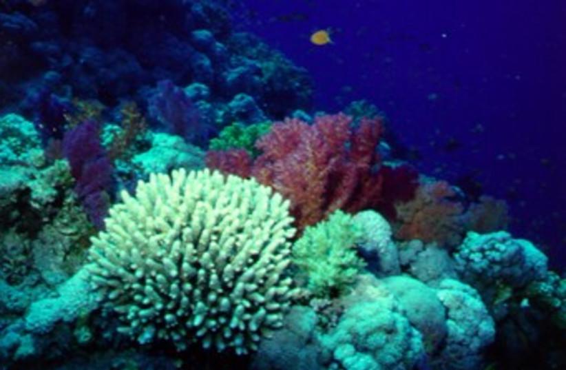 Coral reefs in the Gulf of Aqaba (photo credit: Prof. Amatzia Genin, The Hebrew University)