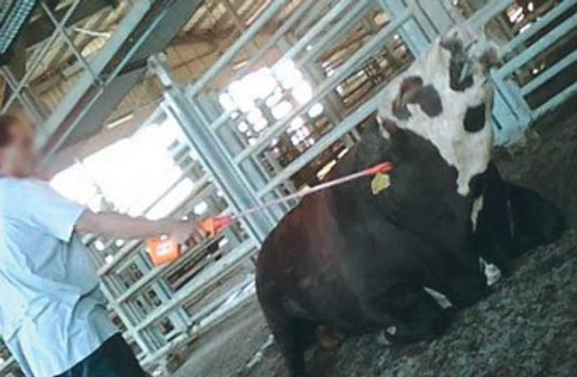 A WORKER at the Adom Adom slaughterhouse 370 (photo credit: Facebook)