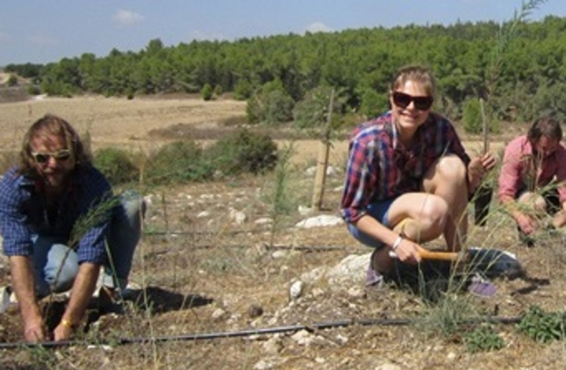 Please the Trees Band Plants Trees in Israel (photo credit: KKL)
