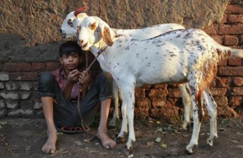 Goats 370 (photo credit:  REUTERS/Anindito Mukherjee)