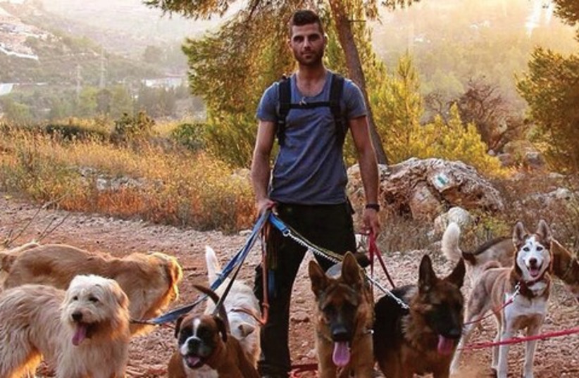 man walking lots of dogs 521 (photo credit: courtesy)