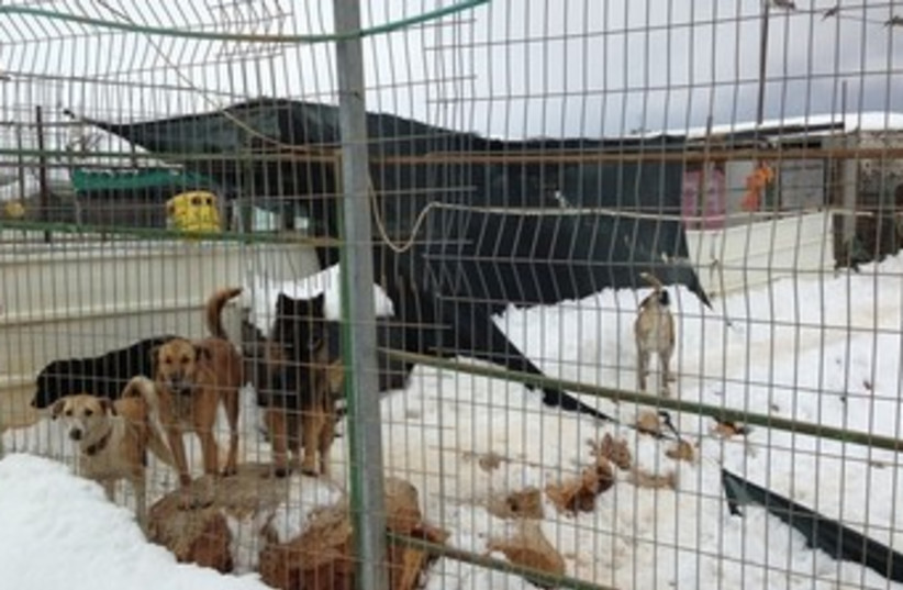 Dogs at bilical zoo 370 (photo credit: Courtesy Jerusalem SPCA)