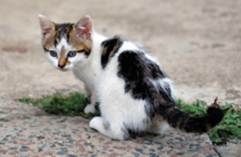 kitten 88 224 (photo credit: Courtesy)