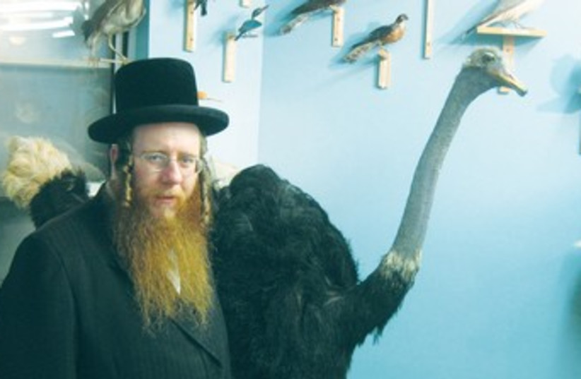 A HASSIDIC man stands in front of a stuffed ostrich  (photo credit: Courtesy)