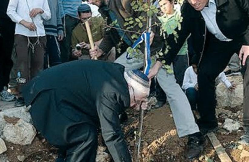 Kiryat Arba chairman Malachi Levinger plants tree, January 15, 2014 (photo credit: MARC ISRAEL SELLEM/THE JERUSALEM POST)
