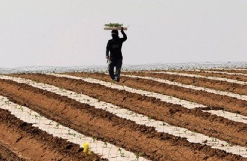 A THAI laborer works in a watermelon field near Sderot (photo credit: REUTERS)