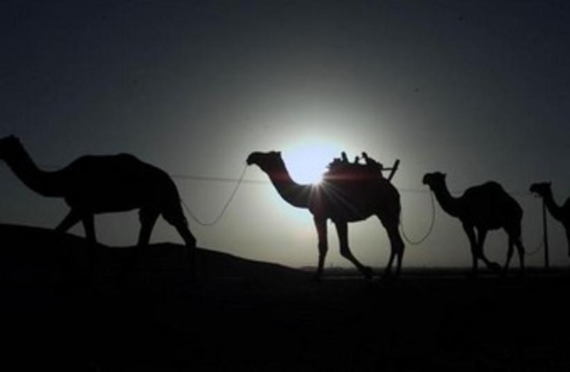 Camels [Illustrative] (photo credit: REUTERS)