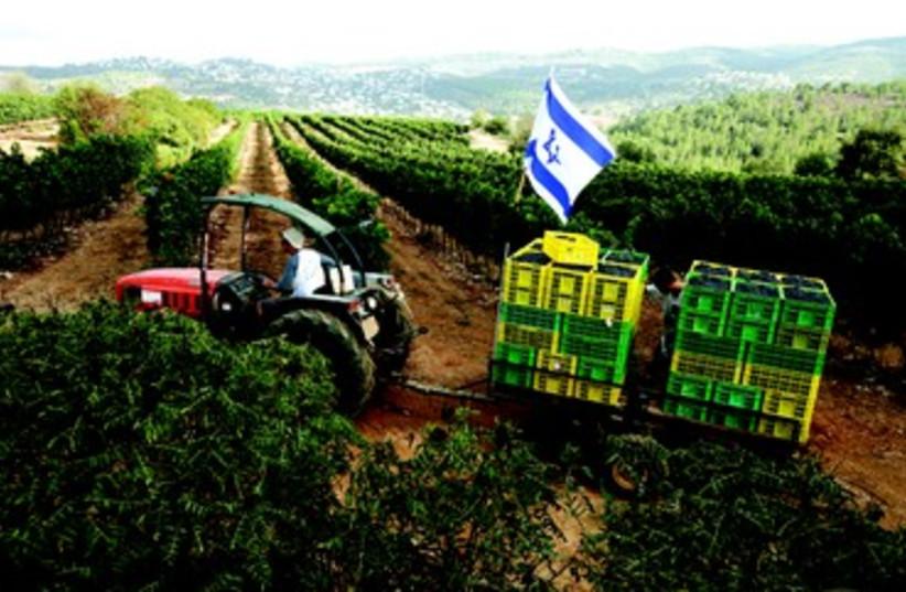 Kibboutz Sde Eliyahou (photo credit: PETRA VAN DER ZANDE)
