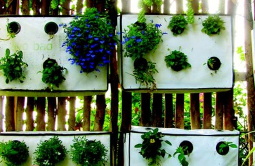 Jardin expérimental à Tel Aviv (photo credit: LEIGH CUEN)