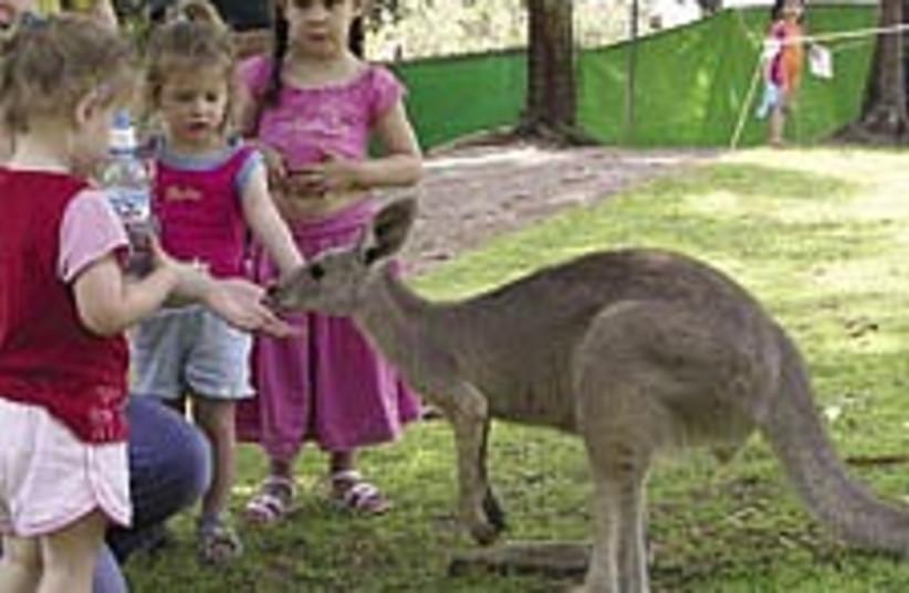 kangaroo 224.88 (photo credit: Liat Collins)