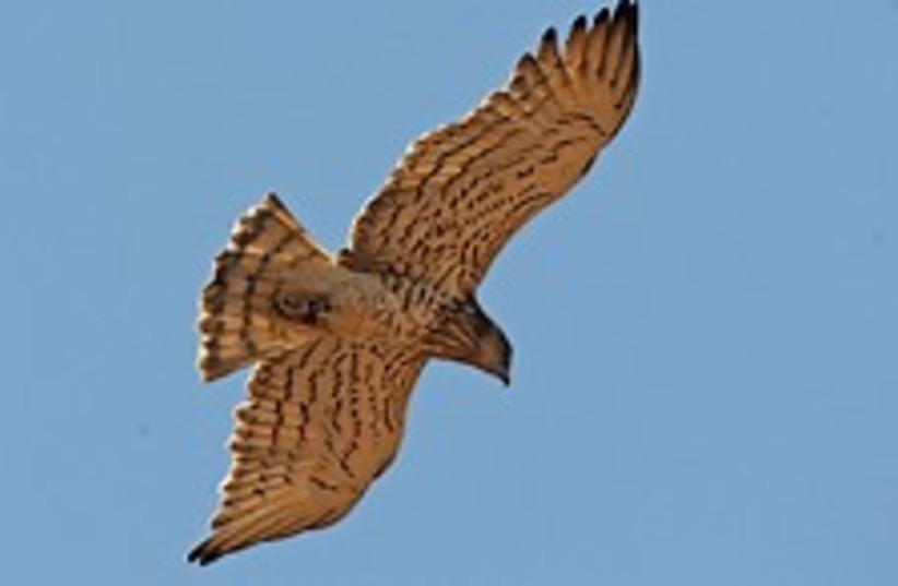 Bird 224-88 (photo credit: )