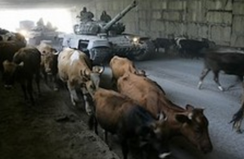 Russian tanks and cows 224.88 (photo credit: AP)