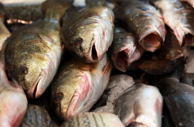 Fresh fish  (photo credit: MARC ISRAEL SELLEM/THE JERUSALEM POST)