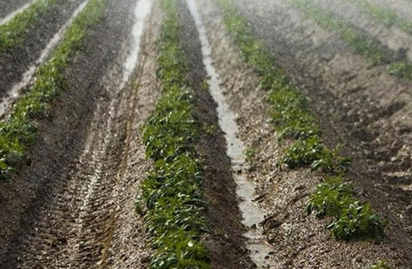 A drip irrigation farm. (photo credit: REUTERS)