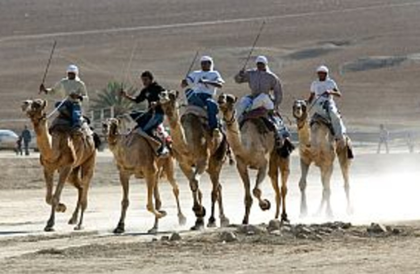 bedouins on camels 298 (photo credit: Ariel Jerozolimski)