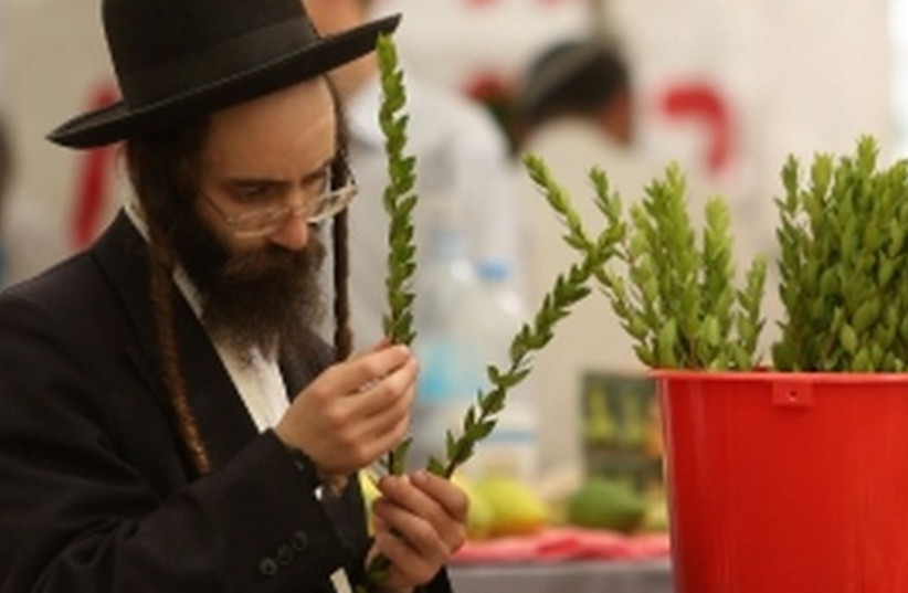 Succot preparations of etrogim and branches for a lulav. (photo credit: MARC ISRAEL SELLEM/THE JERUSALEM POST)