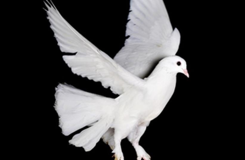 Dove [Illustrative] (photo credit: INGIMAGE)